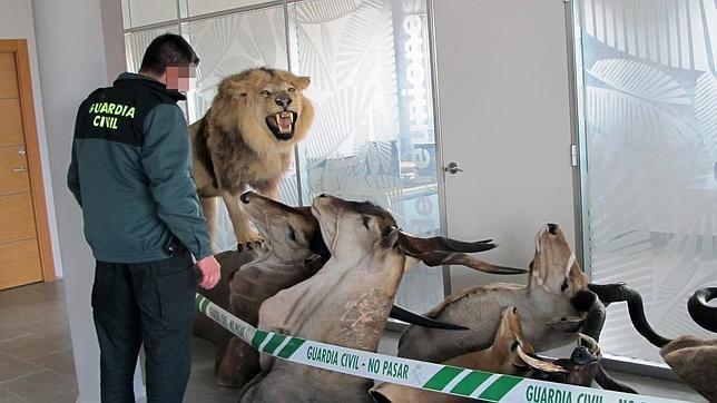 Una fauna ilegal en el escaparate
