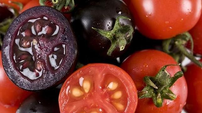 Crean un tomate púrpura «más sano y sabroso»