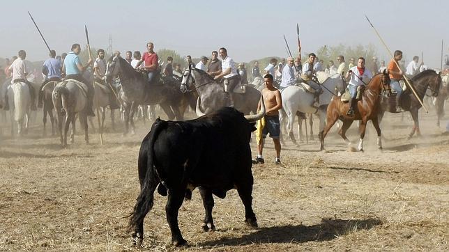 El Toro de la Vega se celebrará el próximo 17 de septiembre