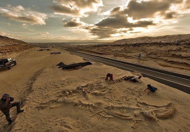 Esqueletos de ballena en el yacimiento Cerro Ballena