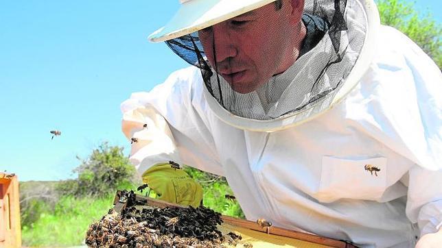 Las abejas buscan «refugio» en el Ayuntamiento de Madrid