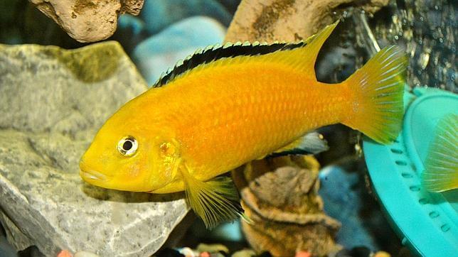 Adiós al mito de la memoria de pez