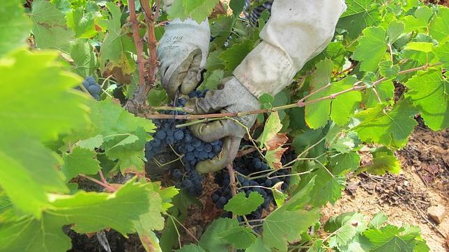 ¿Son fiables las calificaciones de las añadas para elegir un vino?