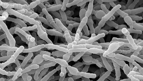 La dieta a edades tempranas modifica las bacterias del intestino