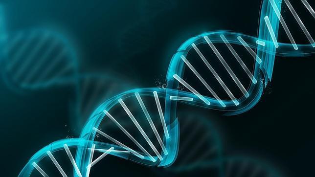 Cualquier célula del cuerpo humano posee un conjunto completo de ADN