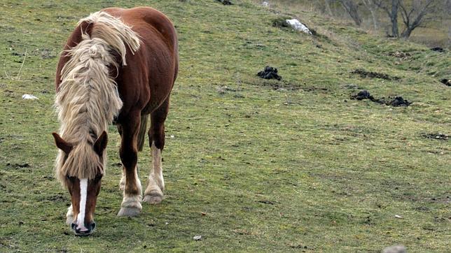Criar Caballos Para El Matadero Es Cada Vez Más Frecuente En España