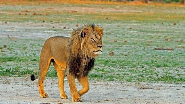 Resultado de imagen de animales salvajes en centroafrica