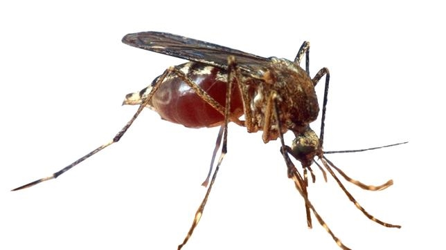 La plaga del mosquito tigre no es erradicable