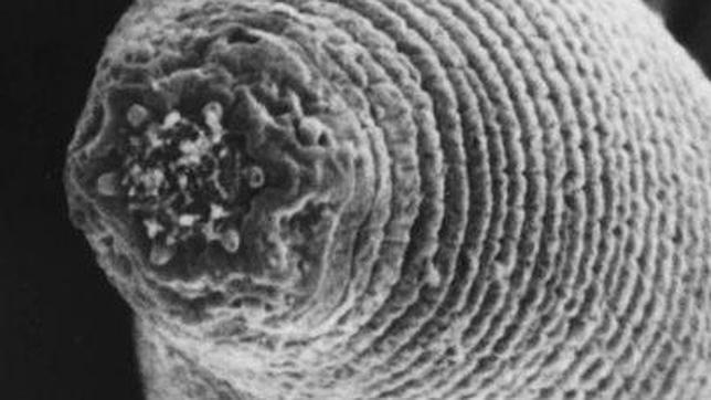 Unas raras criaturas aparecen varios kilómetros bajo la superficie de la Tierra
