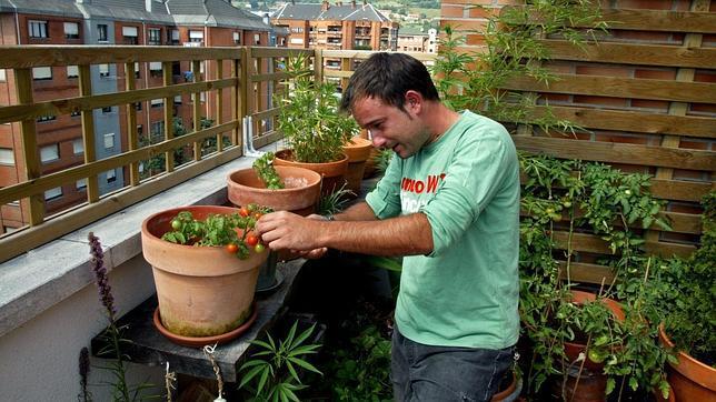 Plantar tomates en el asfalto: Cómo montar un huerto en la terraza de tu piso