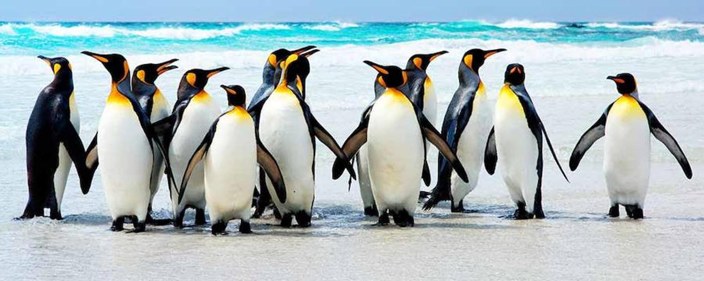 Día de los pingüinos
