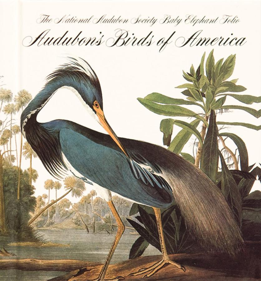 Birds of América