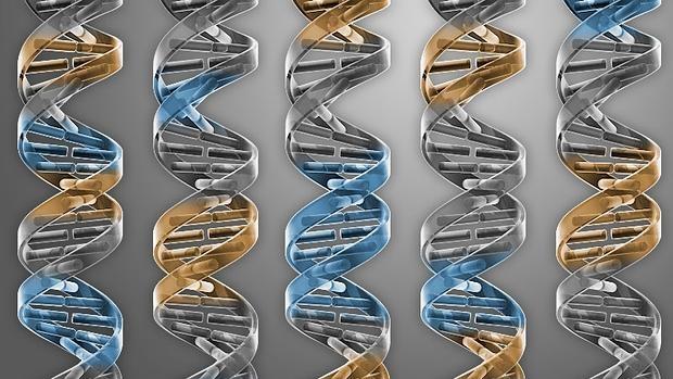 El avance científico se ha publicado este jueves en la prestigiosa resvista «Science»
