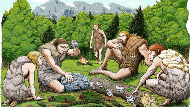 Los neandertales de El Sidrón se alimentaban de restos de piñones, musgo y setas