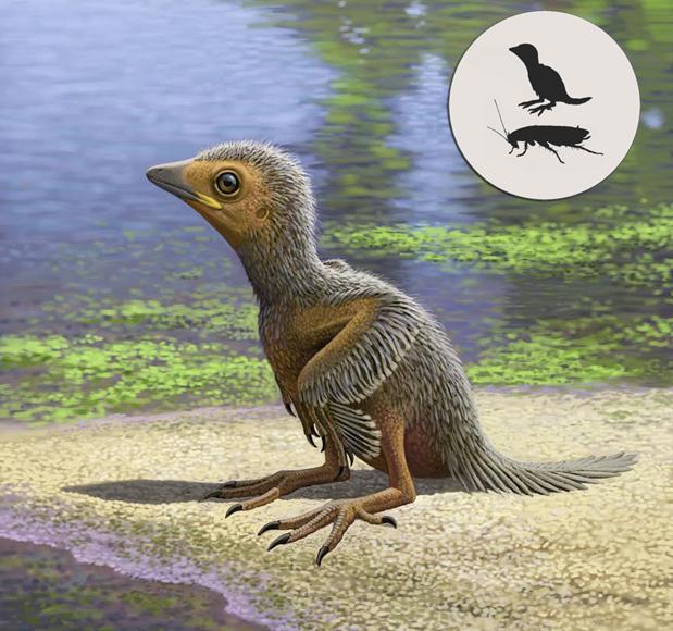 El pequeño polluelo prehistórico