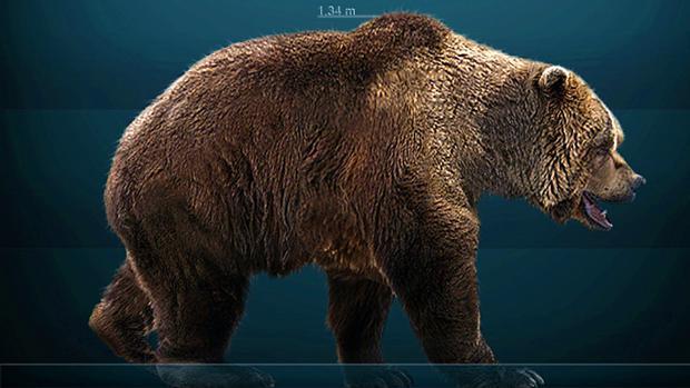 Reconstrucción de un oso de las cavernas