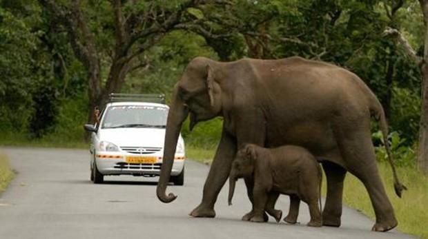 Muchos mamíferos no superarán la sexta extinción masiva