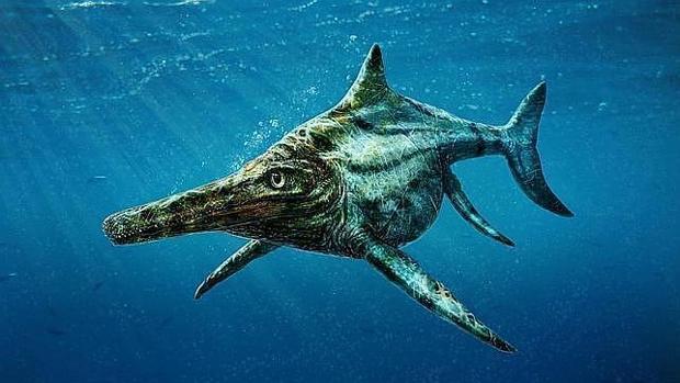 El misterio del ictiosaurio: parecido a los delfines pero ...