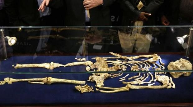 El esqueleto de «Little Foot», que podría ser una anciana australopiteca de hace más de 3,6 millones de años