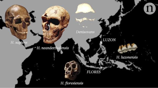 H. luzonensis existió al mismo tiempo que sapiens, neandertales, denisovanos y el hombre de Flores