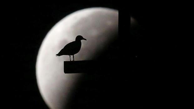Un pájaro a contraluz de la Luna