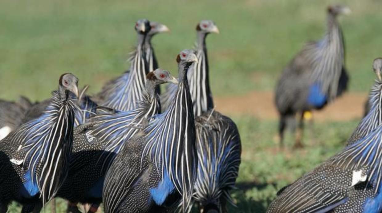 Descubren la primera sociedad compleja en las aves
