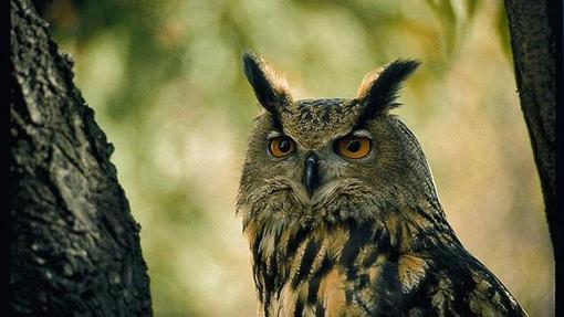 """The """"larks"""" are more active during the day, while the """"owls"""" experience peak activity in the afternoon or evening"""