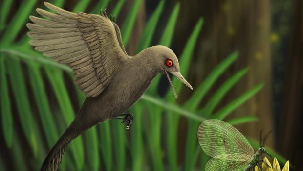 Representación del dinosaurio con forma de colibrí hallado en ámbar