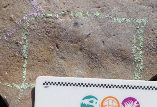 Estas son las impresiones de Ikaria wariootia en piedra.