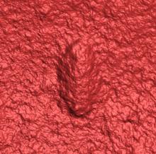 Un escáner láser 3D que muestra la forma regular y consistente de un cuerpo cilíndrico con una cabeza y cola distintas y una musculatura ligeramente acanalada