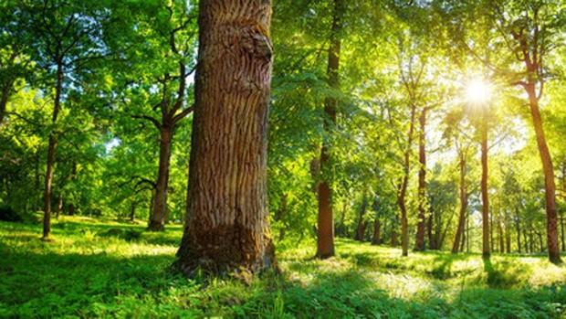 ¿Por qué los árboles de todo el mundo son cada vez más raquíticos?