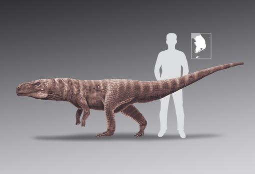 Tamaño del cocodrilo comparado con el de un humano adulto