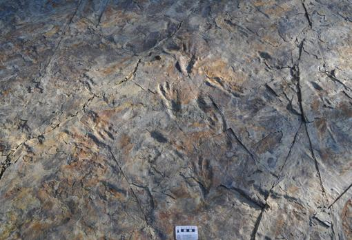 Huellas dejadas por cocodrilos bípedos en Corea del Sur