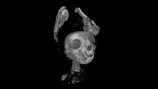 Vista recerada en 3D del gato momificado