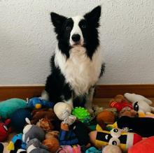 'Rico', con sus juguetes
