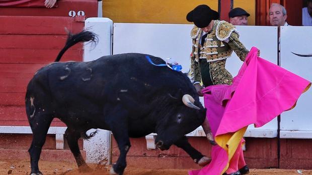 Pablo Aguado torea a la verónica