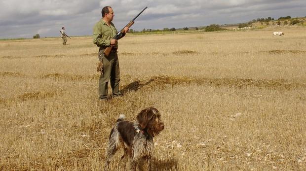 Un perro de caza