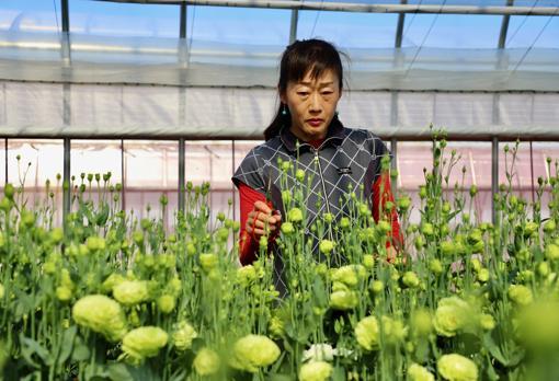 Yukari Shimizu takes care of her flowers