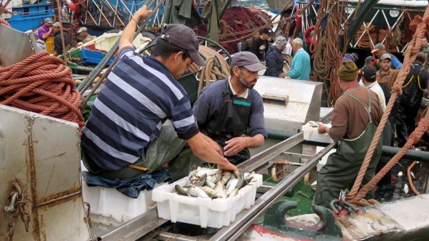 Pescadores en el puerto de Dajla (Sáhara Occidental)