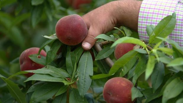 Los importes de la ayuda a los productores pueden superar los 14,3 millones de euros