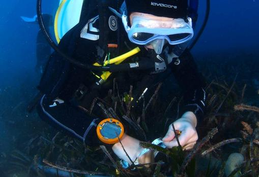 Un buzo recoge muestras marinas para analizar en el Campus de Excelencia Internacional del Mar