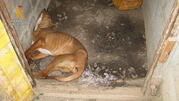 Imagen facilitada por la Guardia Civil, que muestra al cachorro muerto por inanición en el habitáculo en el que estuvo encerrado