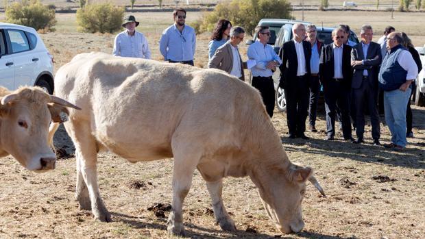 Miembros de la UE, en su visita a una explotación de ganado en Ávila