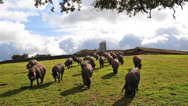 Talavera, Erustes, Los Cerralbos, Brihuega, Montealegre del Castillo y Almendros han rechazado granjas