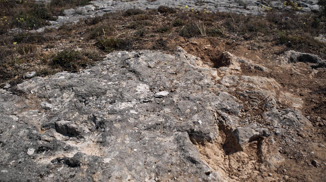 Hallan En Burgos Restos De Un Dinosaurio De Unos 145 Millones Años