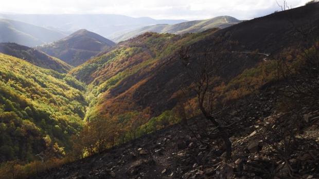 Monte quemado en la zona de montaña de los Ancares en Lugo