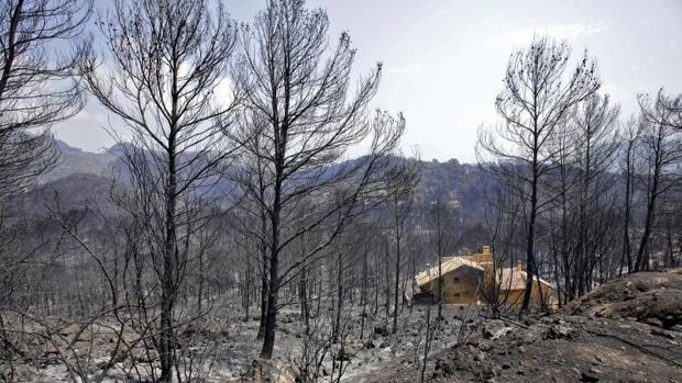Zona arrasada por el fuego en el incendio de Llutxent y otros seis municipios valencianos, en agosto