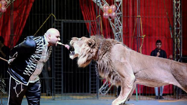 El domador Mohamed Sayed El Helwe actúa con un león en el Circo Nacional de Egipto en El Cairo