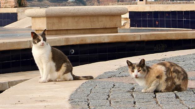 Imagen de archivo de dos gatos callejeros