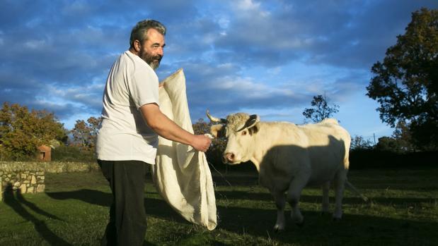 José Pinto con una de sus vacas